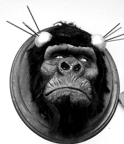 Gorilla Head