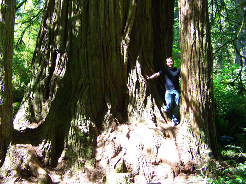 Jayme On a Redwood